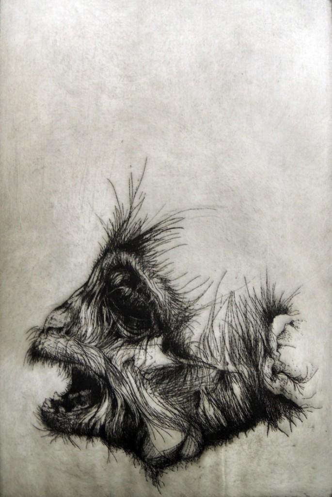 cornell monkey5