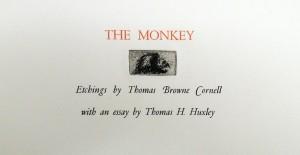 cornell monkey6