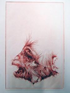 cornell-monkey7