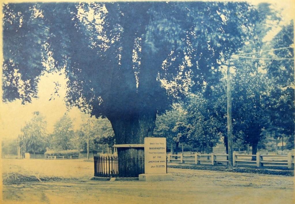 washington's tree2