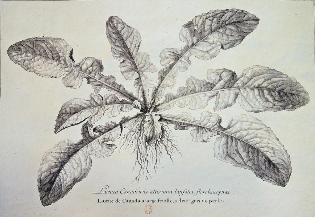 botanicals3