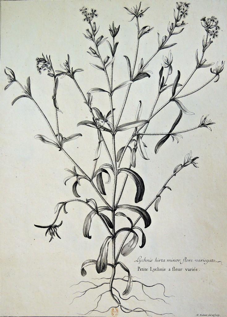 botanicals5