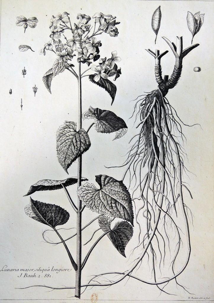 botanicals6