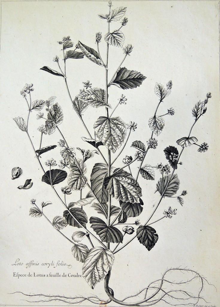botanicals7