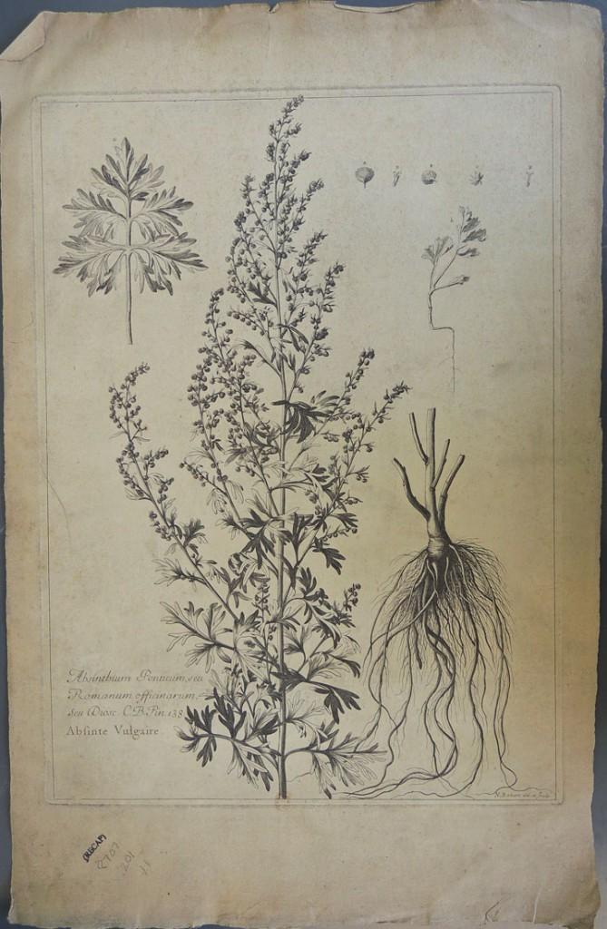 botanicals9