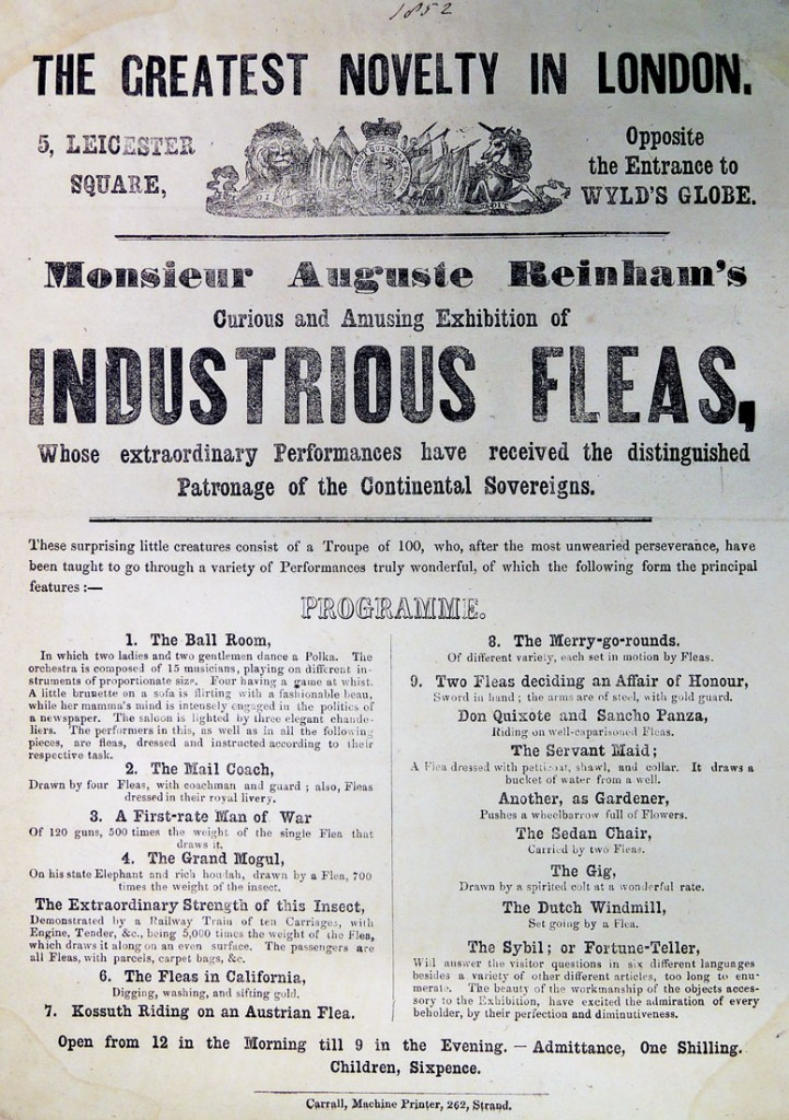 flea broadside