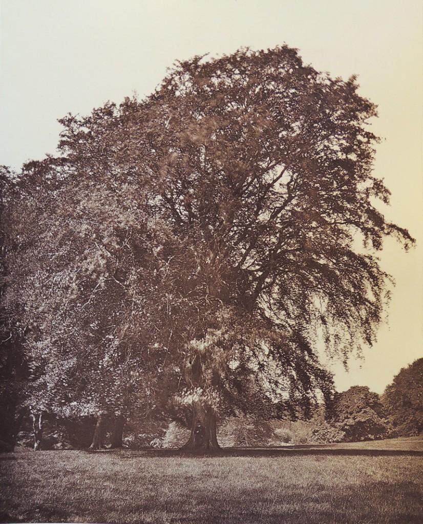 trees of fife10