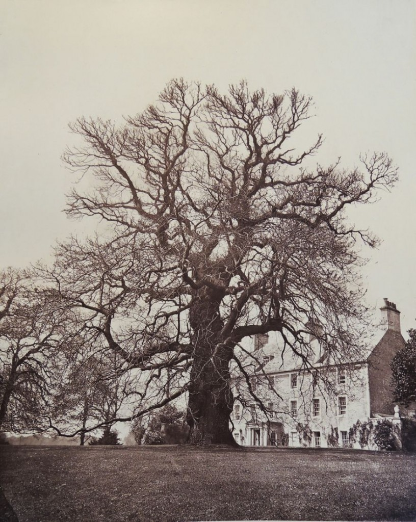 trees of fife3