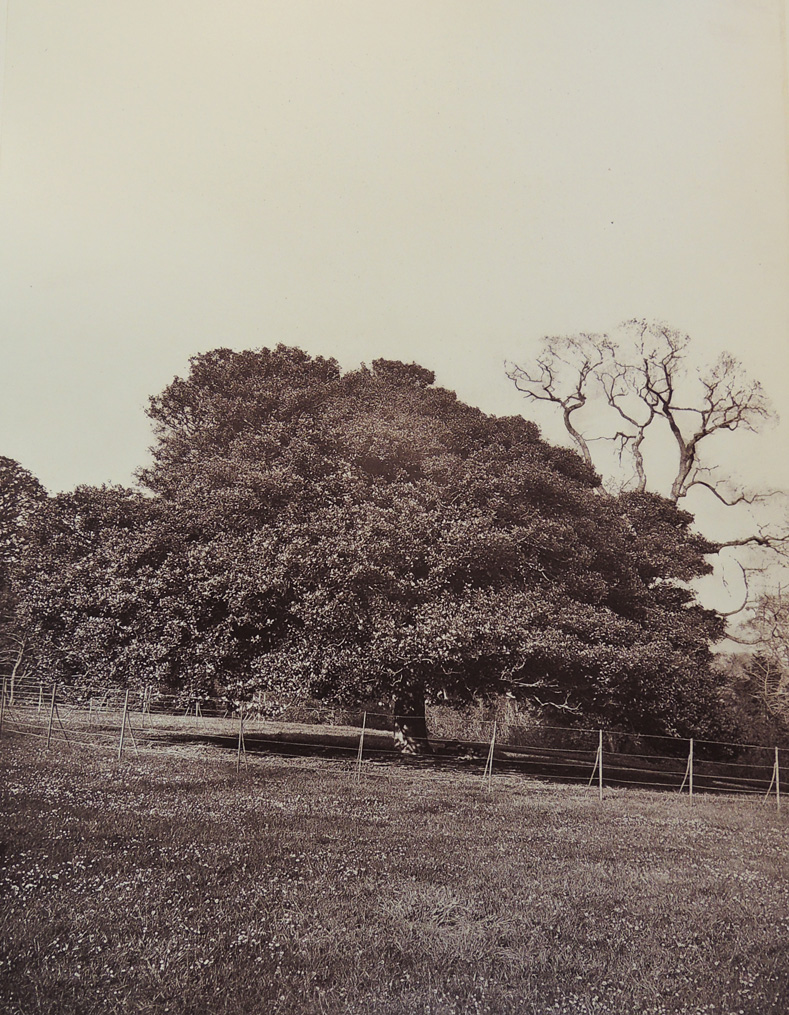 trees of fife6