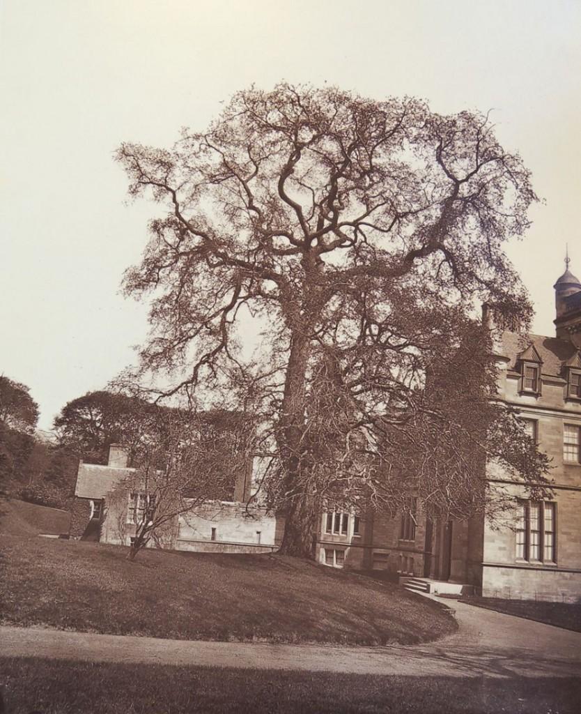 trees of fife9