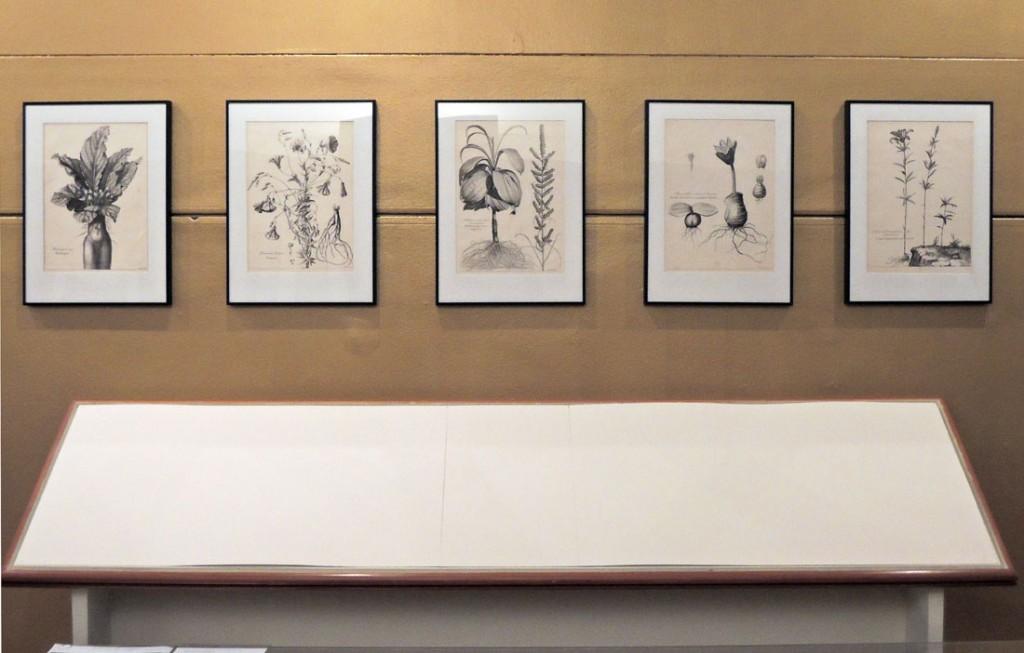 v gallery8