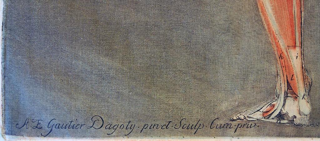 dagoty5