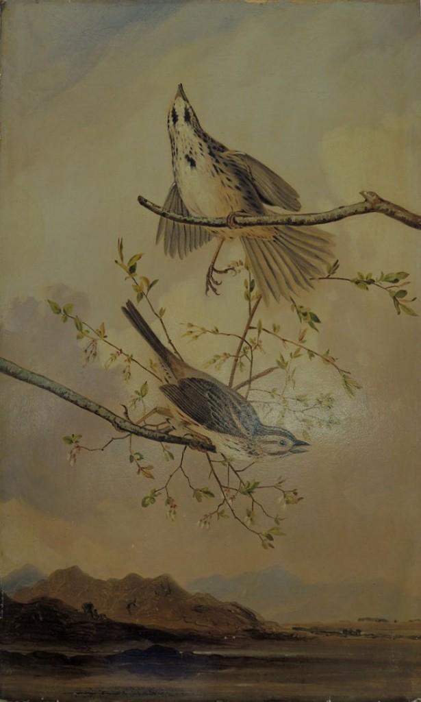 song sparrow1