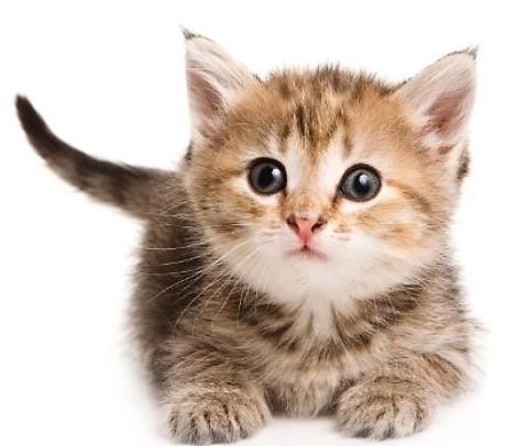 kittens3-2